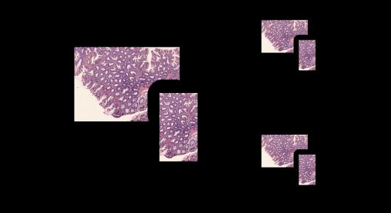 Sharing microscopy slides