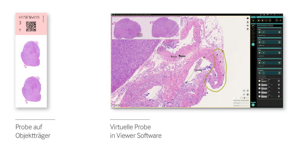 Virtual_Microscopy_Viewer_Software