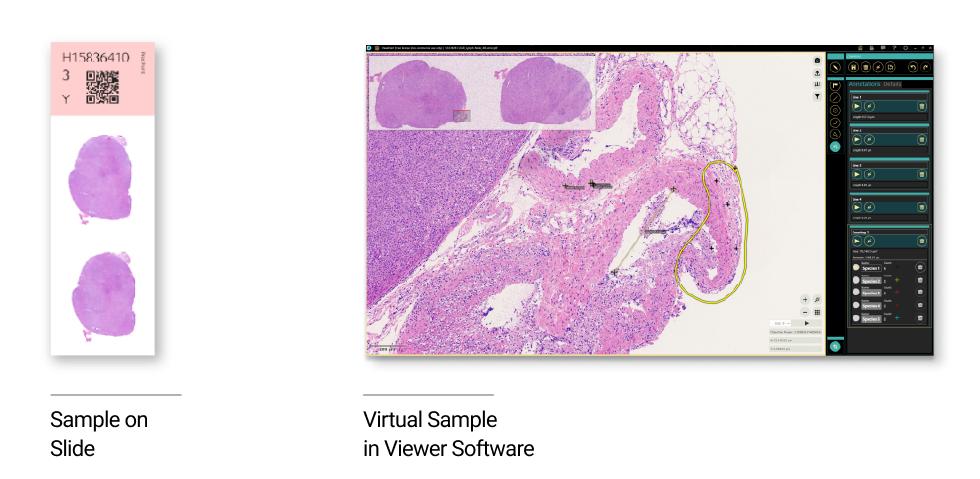 Vitual_Microscopy_viewer_software